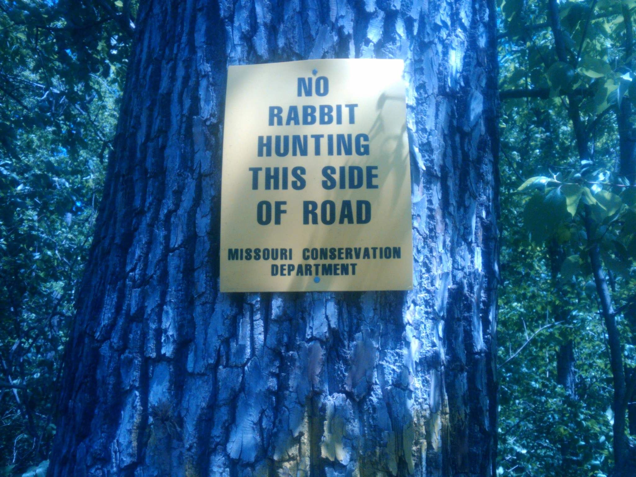 On one side of the trail, no rabbit hunting, on the other side, it was  allowed. Now really?! Rabbit hunting? I don't understand why ...